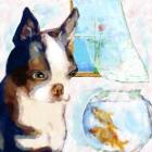 bostonfish-_small
